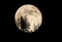 THEMENBILD - der Mai Vollmond geht hinter Siluetten von Bäumen am Horizont auf. Gleichzeitig ist er auch der letzte Supermond des Jahres., aufgenommen am 06. Mai 2020 in Kals am Grossglockner, Österreich // the May full moon rises behind siluettes of trees on the horizon. It is also the last super moon of the year. May 06, 2020, Kals, Austria. EXPA Pictures © 2020, PhotoCredit: EXPA/ Johann Groder