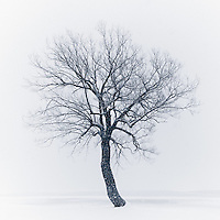 http://Duncan.co/tree-at-browns-bay-park