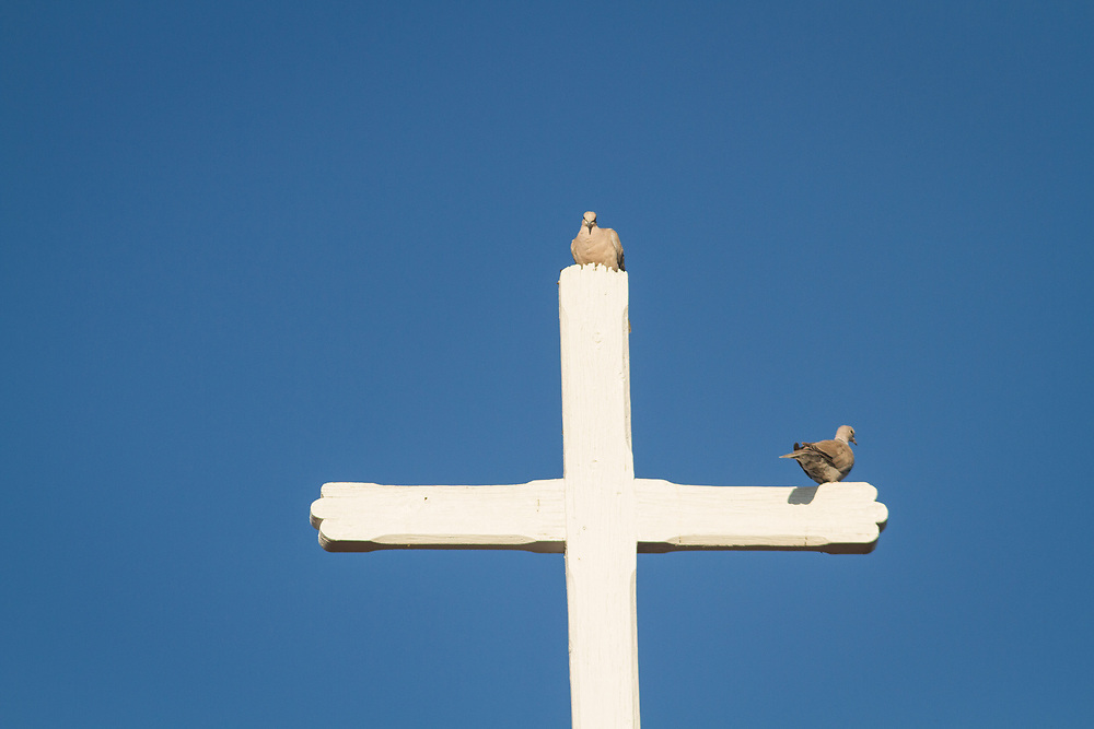 Doves perch on a cross that tops the steeple of St. Luke's Episcopal Church.