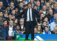 Football - 2016/2017 Premier League - Chelsea V Leicester.<br /> <br /> Chelsea Manager Antonio Conte screams to his team at Stamford Bridge.<br /> <br /> COLORSPORT/DANIEL BEARHAM