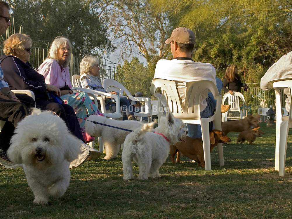 people gathering in a dog run USA