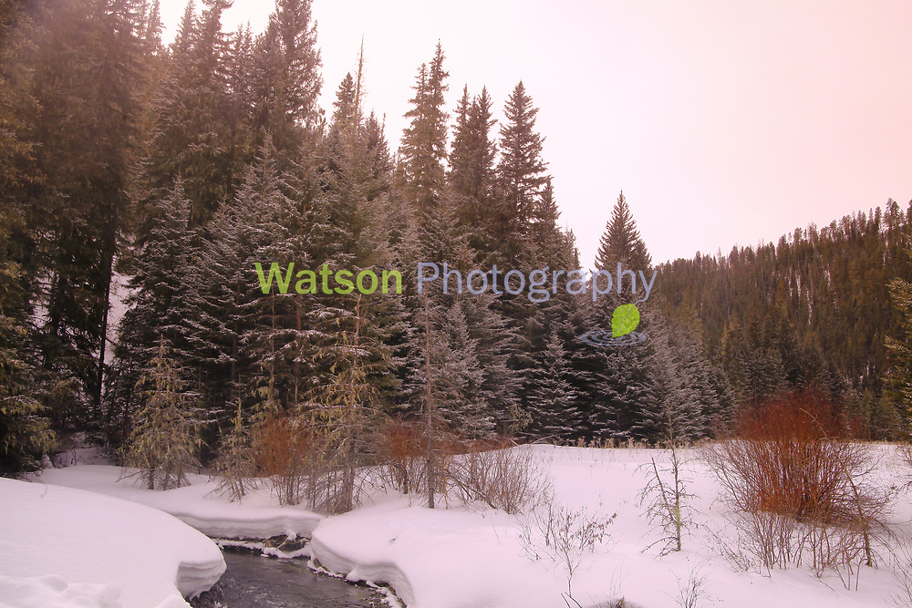 Winter's Soft Light
