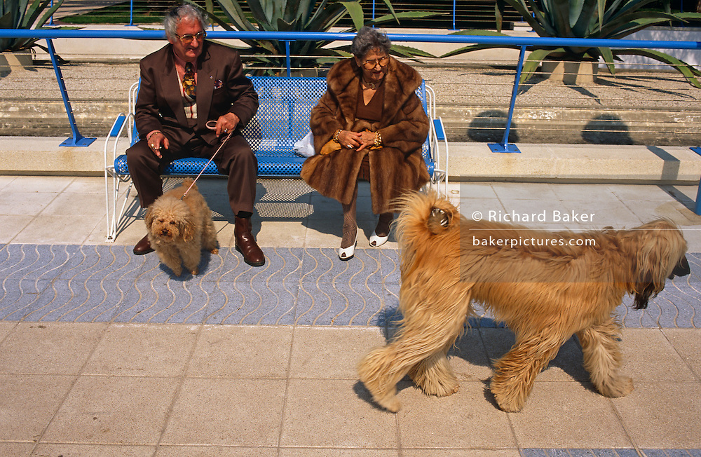 An elderly and eccentric couple sit on a park bench in the French Mediterranean resort of Juan-les-Pins near Antibes, with their own pet dog on a lead while watching an Afghan Hound which struts past in a showy manner. The shaggy Afghan's coat resembles the colour of the lady's own pet and the texture of her own coat. It is around mid-day and looks warm but the couple are dressed for deepest winter, oblivious to the warm sunshine. The hairy Afghan strides ceremoniously and with great style, while the small pooch on the peoples' lead looks nervous and uncomfortable. Juan-les-Pins is a town in the commune of Antibes, in the Alpes-Maritimes, in southeastern France, on the French Riviera (Côte d'Azur). .