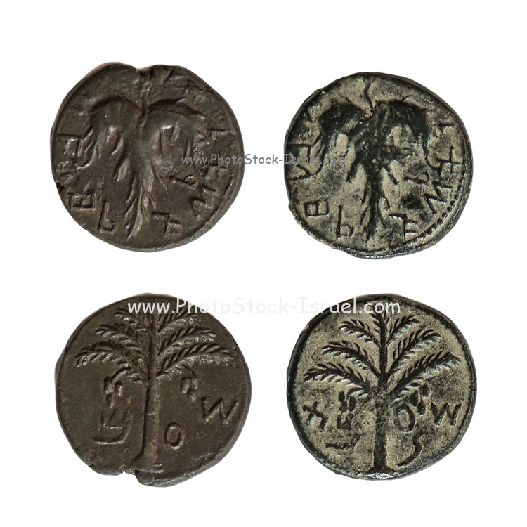 Simon Bar-Kokhba coins 132-135 CE bronze 25mm vine leaf and palm tree On White Background