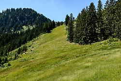 THEMENBILD - Der Blick hinauf in die Alte Schneise, aufgenommen am 26. Juni 2017, Kitzbühel, Österreich // The view up into the Alte Schneise at the Streif, Kitzbühel, Austria on 2017/06/26. EXPA Pictures © 2017, PhotoCredit: EXPA/ Stefan Adelsberger