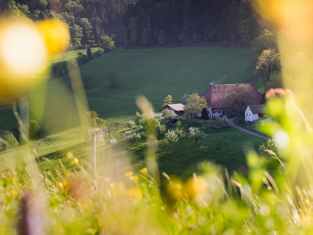 Scenic view of farmhouse on green landscape of Black Forest, Yach Elzach, Baden-Wuerttemberg, Germany
