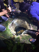 "Four year old killed as she tumbles down uncovered drain<br /> <br /> CCTV footage from a shop in a Samut Prakarn housing estate shows a four year old girl falling down an uncovered sewer opening to her death.<br /> <br />  The tragedy occurred near a football pitch next to building 7 at the Ban Eua-Athorn estate behind Wat Ngon Kai where many children play.<br /> <br /> Police are set to meet with all the relevant authorities to decide what action to take in the case.<br /> <br /> Dead at the scene was four year old Yosita Bunngam who everyone called ""Namnung"".<br /> <br />  Her father Ratchanon Bunngam, 42, said yesterday evening that Namnung had left their room in building 2 with her elder brother to go and buy sweets from a neighborhood shop.<br /> <br />  While the brother was buying the sweets she ran off behind the shop. After that he could not find her and went home to tell the parents she was missing.<br /> A search was mounted and when that failed to find the little girl the father asked to look at CCTV footage from the shop when the tragedy was discovered. In the footage Namnung seems to step on something laid casually over the drain and then topple in.<br /> <br />  Krathum Baen police and Ruamkathanyu foundation staff rushed to the scene and a suction device was first employed to lower the water level in the drain.<br /> Then the rescuers could see the tragic sight of the little girl's feet floating in the water.<br /> <br /> A ladder was used to enter the drain and get her out but she was already dead.<br /> ©Thai Rescue Service/Exclusivepix Media"