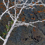 A macro of calafate berry against rocks in Torres del Paine National Park, Patagonia, Chile.