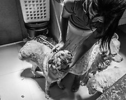 Sara Moran with one of her disabled dogs. The dog had sustained severe injuries after being hit by a car and had his right hind leg amputated.