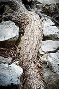Vormen door de natuur ontstaan - Shapes of nature