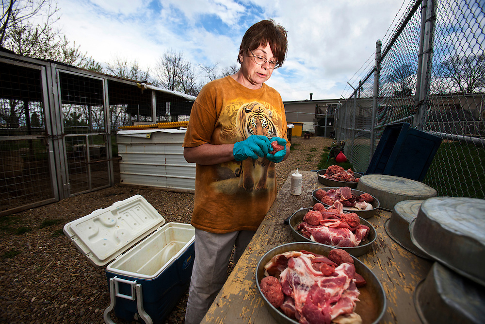 D F. prepares dinner for the remaining four of her eight exotic cats.  Their meals consist of expired meat from the Walmart meat program--a low cost program which relinquishes expired meats each moth at low cost.  The cats also ate road kill, deceased livestock and donations from local friends.