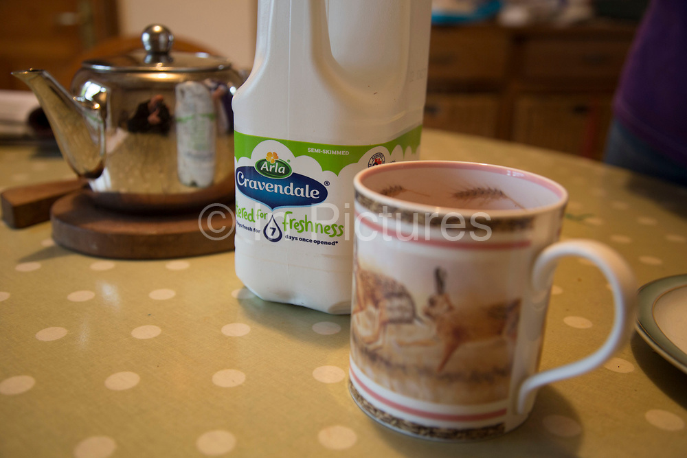 The end product on the farmhouse table. Cravendale milk for a cup of tea. Made by parent company Arla. Arla is a farmer owned international dairy and dairy products cooperative. Home to some of the UK's leading dairy brands, including Cravendale, Arla Foods UK supplies a full range of fresh dairy products to the major retailers and foodservice customers, from its 3000 cooperative farmers across the UK and further 9000 in Europe. Wildon Grange Dairy Farm, Coxwold, North Yorkshire, UK. Owned and run by the Banks family, dairy farming here is a scientific business, where nothing is left to chance. From the breeding, nutrition and health of their closed stock of Holstein Friesian cows, through to the end product, the team here work tirelessly, around to clock to ensure content and healthy animals, and excellent quality milk. (photo by Mike Kemp/In Pictures via Getty Images)