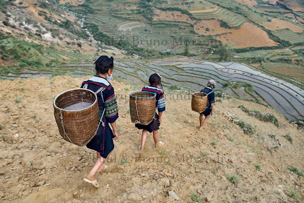 Vietnam. haut Tonkin. Region de Sapa. Jeune fille d'ethie Hmong Noir travaillant dans les rizières. // Vietnam. North Vietnam. Sapa area. Young girl from Black Hmong ethnic group working on the rice fields.