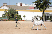 Lunge rope training at the Royal Andalusian School of Equestrian Art (Real Escuela de Equetsre) Andalucia, Jerez, Spain