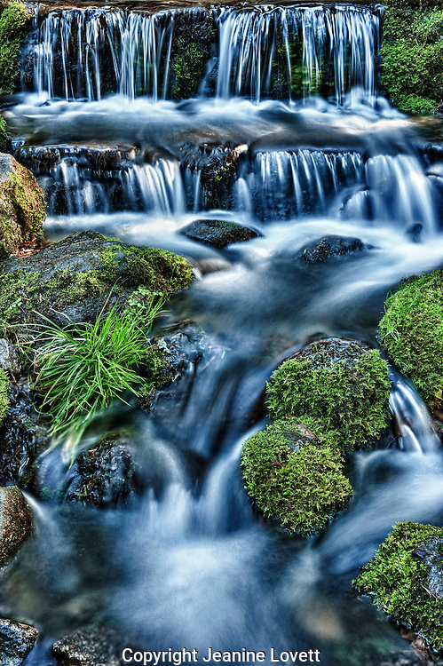 Fern Spring, small natural spring in Yosemite Valley.