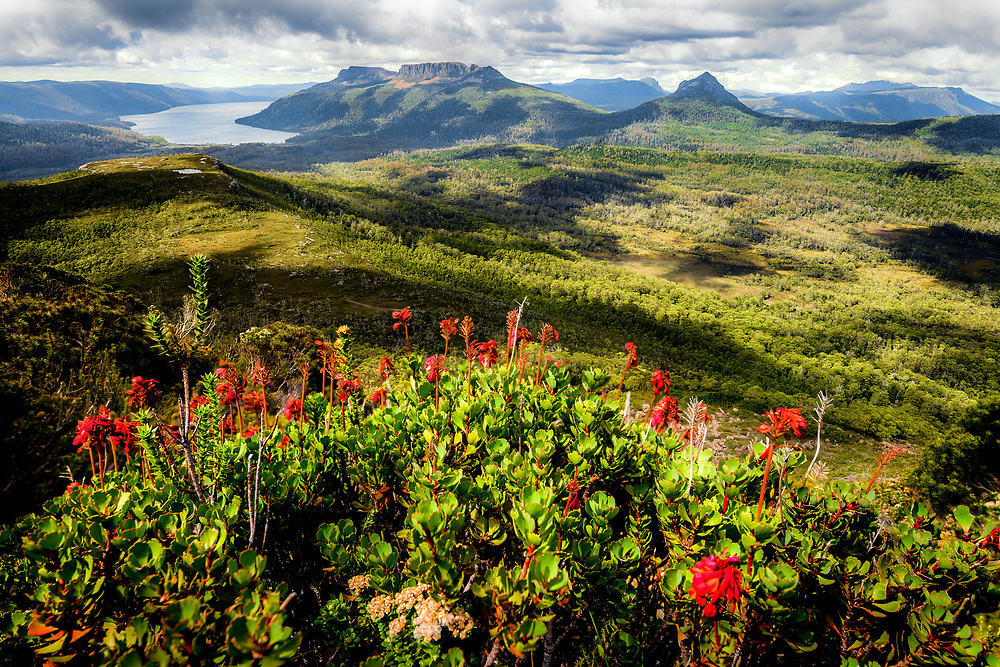 View to Lake St Clair, Mount Olympus and Mount Byron from the top of Mount Gould in Cradle Mountain–Lake St Clair National Park, Tasmania