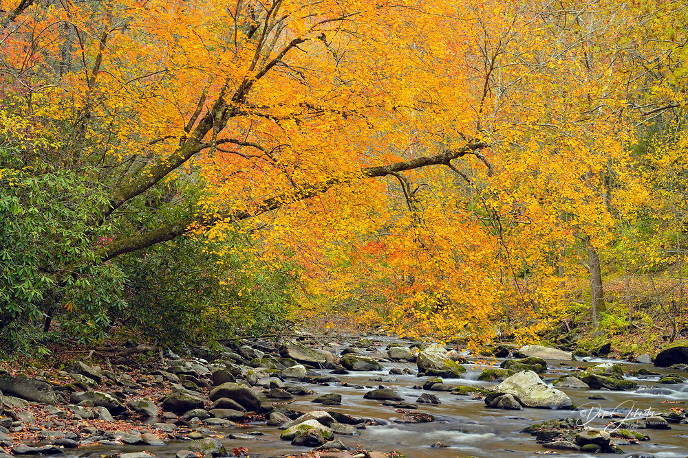 Autumn foliage near the Little River, Great Smoky Mountains NP, Tennessee, USA
