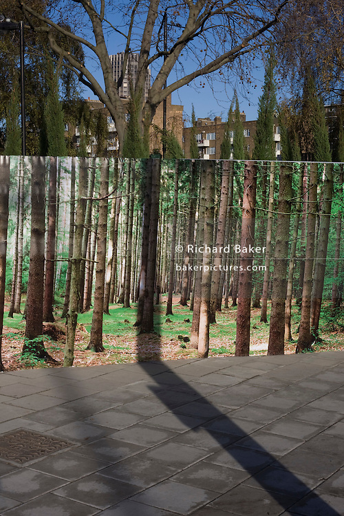 Artwork of forest backdrop with tall, straight pine trees.