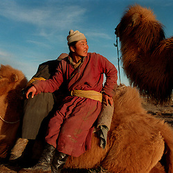 TOV AIMAG, MONGOLIA--4/2001--  Herders and camels at the end of their day.  In Mongolia nomadic herdsman live in much the same way as they did a millenium ago, despite 70 years of Soviet occupation and Stalinist purges that inhibited their national identity...Copyright 2001 Susana Raab