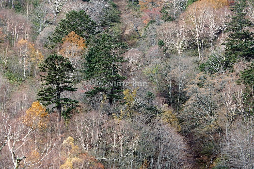 woods during fall season Japan