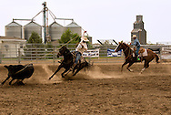 Nate Roskelly, Garrett Severe, Big Loop, Will James Roundup, Ranch Rodeo, Hardin, Montana, MODEL RELEASED, PROPERTY RELEASED riders & horses