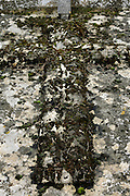 cross overgrown with moss on a grave
