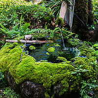 Water Basin at Nakae Jungoro House Garden - Nakae Jungoro House is one of the public Omi merchant residences in the townscape of Gokashokondo, which has been selected as an important traditional buildings and gardens preservation district of the country. This pond garden has large stepping stones, surrounding a decorative pond.  The village was formed by prosperous Omi merchants from the late Edo period to the Meiji, Taisho, and early Showa eras remains in the center, and the surrounding area is traditional.Along with the shrines and temples and rice fields distributed inside and outside the village, it conveys an historical landscape.