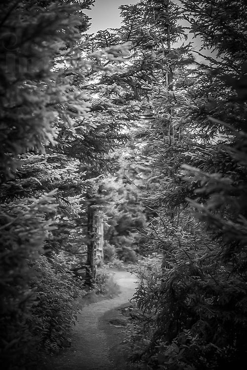 """This photograph was captured using a wide Angle lens to give it a """"Tilt Shift"""" feel.  Taken at Spruce Knobs, the highest point in the state of West Virginia."""