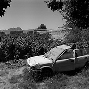 An abandoned Toyota automobile by a grapefield suspected of being booby trapped by insurgents in the Sperwan area of Panjwaii District, Kandahar, Afghanistan. (Credit Image: © Louie Palu/ZUMA Press/The Alexia Foundation).....