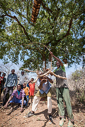 27 January 2019, Burka Dare IDP site, near Micha, Seweyna woreda, Bale Zone, Oromia, Ethiopia: The Oromo people make beehives by carving out logs of wood, to be hung in trees. The community then harvests honey from the hives, once bees have come to colonize them. The Lutheran World Federation supports internally displaced people in several regions of Ethiopia, through emergency response on water, sanitation and hygiene (WASH) as well as long-term development and empowerment projects, to help build resilience and adapt communities' lifestyles to a changing climate.