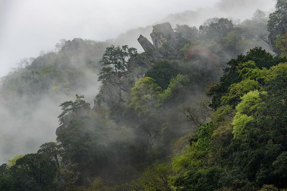 云雾间的山石,唐家河自然保护区,四川,中国。Foggy mountain, Tangjiahe Nature Reserve, Sichuan, China.