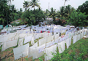 Washing day, washing hung out to dry India, Kerala, a state on the tropical coast of south west India