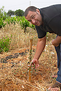 Pierre Quinonero showing an olive tree plant in the vineyard. Domaine de la Garance. Pezenas region. Languedoc. Owner winemaker. France. Europe. Vineyard.