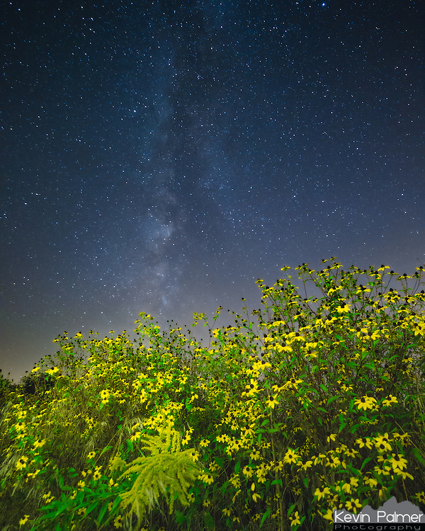 September is always a really good month to shoot wildflowers around here. After finding this thick clump of black-eyed-susans, I placed my tripod underneath them with a backdrop of the milky way. I didn't really like the color temperature of the light from my headlamp. So I actually just found a yellow image on my phone, made the screen bright, and light painted with that. This is a focus stack of 2 images.