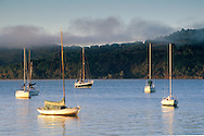 Sailboats anchored and fog at sunrise in calm water, near Point Reyes, Tomales Bay, Marin County, California