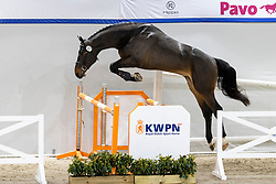 125, Nevantos<br /> KWPN Hengstenkeuring 2021<br /> © Hippo Foto - Dirk Caremans<br />  02/02/2021