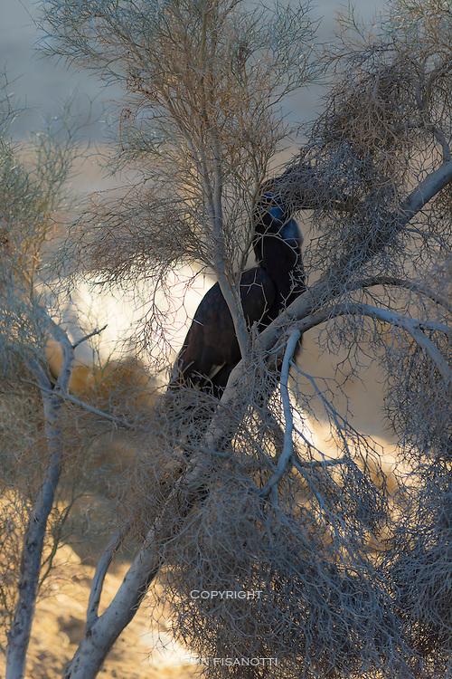 Abyssinian Hornbill hides in plain sight