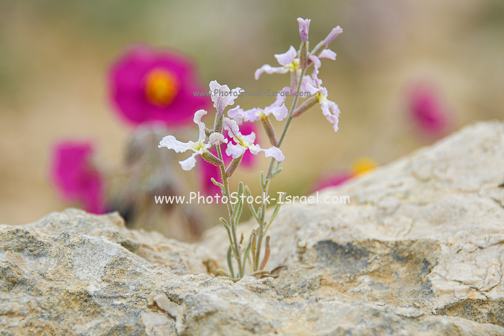 Photographed at the Lotz Cisterns in The Negev Desert Israel in March