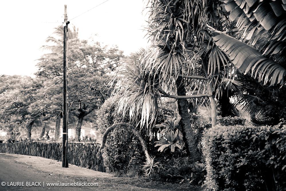 Roadside tropical foliage
