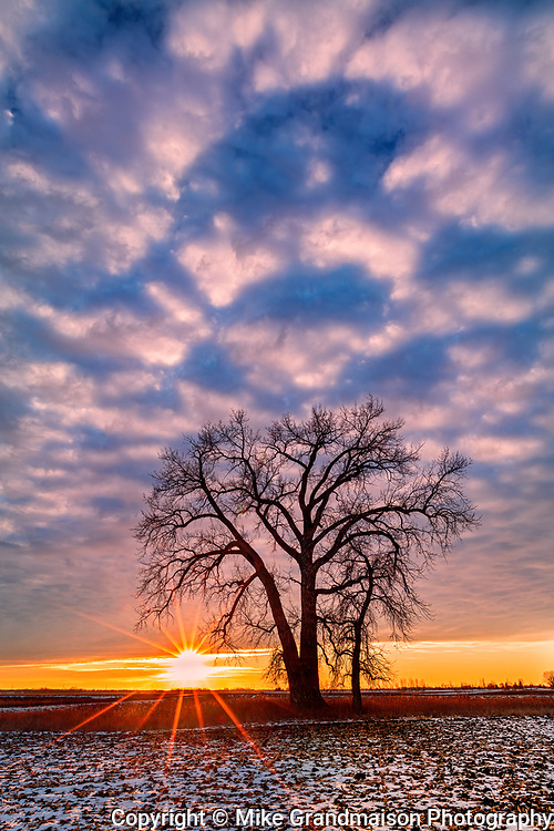 Plains cottonwood tree and clouds at sunset. Grande Pointe. Manitoba. Canada<br />Grande Pointe<br />Manitoba<br />Canada
