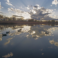 Clouds are reflected around duck hunting decoys.