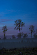 Foggy and calm night over forests, young forest stands and clearings nearby River Amata, near Skujene, Latvia Ⓒ Davis Ulands | davisulands.com