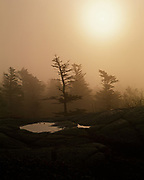 Granite pool and dwarfed red spruce shrouded in fog, summit of Cadillac Mountain, Mount Desert Island, Acadia National Park, Maine.