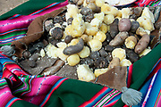 Bolivia June 2013. Cajamarca. Meeting with women. A variety of potatoes for shared lunch.