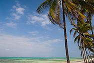Palms above the sea at Pingwe, Zanzibar, Tanzania