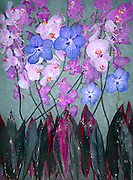 /Users/arjan/Documents/work/ NAP/09-07-29 wet orchid/Output/.09-07-29 wet orchid 17518.tif