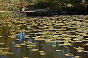 Alfred Caldwell Lily Pool, The Rookery, Lincoln Park Chicago, IL.