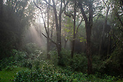 The woodland at dawn in Parambikulam Wildlife Sanctuary on 19th November 2009 in Palakkad, Tamil Nadu, India.