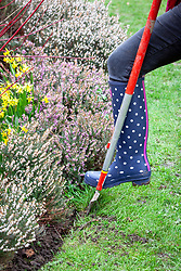 Using a half moon cutter to redefine lawn edges in early spring