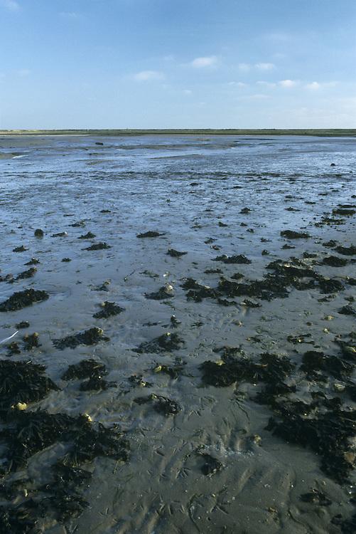 Mudflats, Pagham Harbour, West Sussex, UK